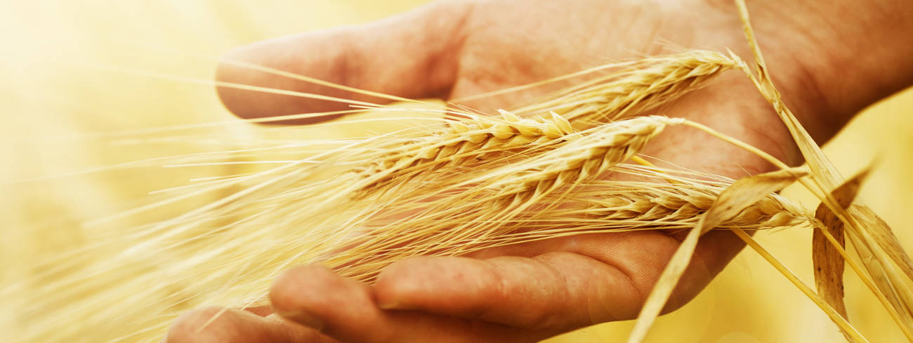 Nulandis Agrochemical Industry